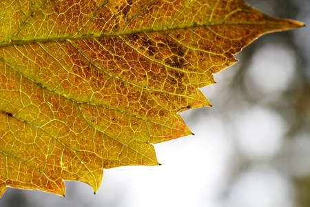 complementary: leaf texture close-up, close-up shot of fiber, nature, background Stock Photo