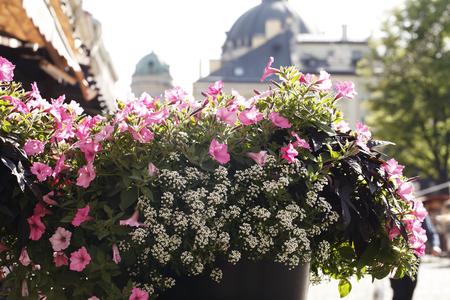 街で花の美しい花壇 写真素材