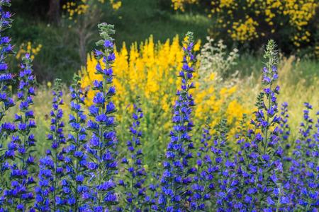 beautyful: beautyful yellow and blue flowers