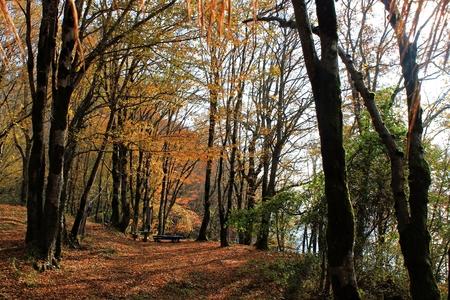 arboleda: bench in autumn grove