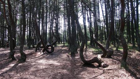 森林、唾を吐く、クルシュー カリーニング ラード地域ロシアの踊り