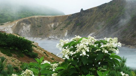 sakhalin: Flowers near steam lake in the crater of Golovnina volcano in Kunashir island, Kurily, Russia Stock Photo