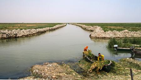 Mesopotamian Marshes, habitat of Marsh Arabs aka Madans, Iraq