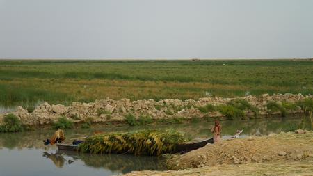 Mesopotamian Marshes, habitat of Marsh Arabs aka Madans near Basra Iraq Stock Photo