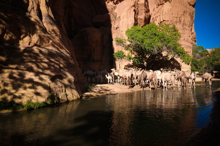 Panorama inside canyon aka guelta Bashikele with camels , East Ennedi, Chad Stockfoto
