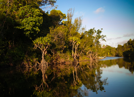 Landscape of the channel between Rasoabe and Ranomainty Lakes in Toamasina Province, Madagascar