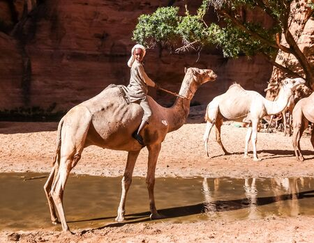 Portrait of drinking camels in canyon aka guelta Bashikele in East Ennedi, Chad Stock fotó