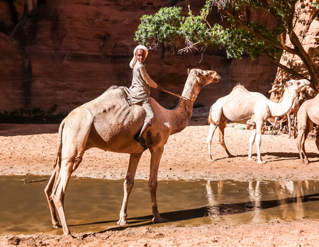 Portrait of drinking camels in canyon aka guelta Bashikele - 07 november 2018 East Ennedi, Chad