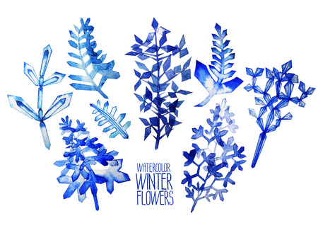 fantasy: Fantasy winter flowers. Watercolor floral design elements isolated on white background