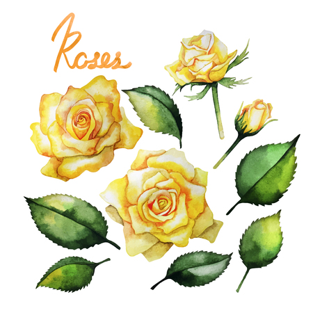 rose bouquet: Watercolor roses collection. Leaves and flowers isolated on white background