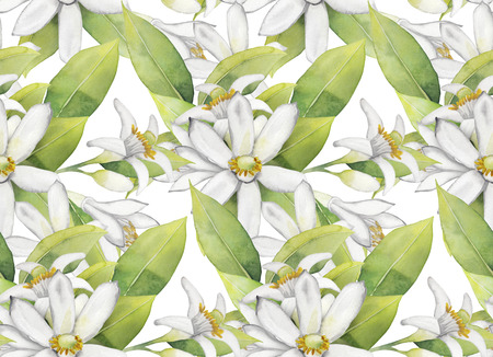 leaves pattern: Watercolor white lemon flowers. Seamless floral pattern.