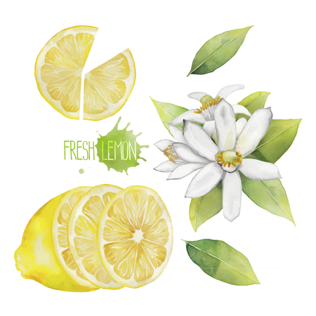 Watercolor lemon collection.  Fruit, leaves and flowers isolated on white background Ilustração