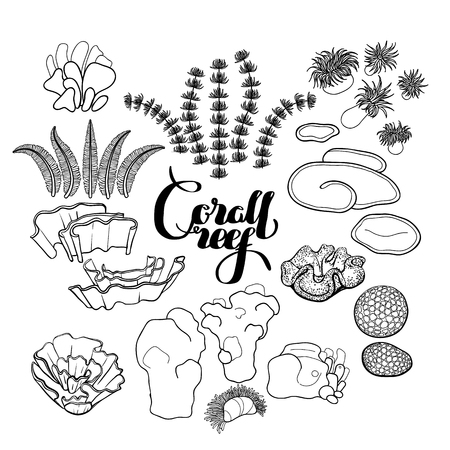 ocean plants: Collection of  ocean plants and coral reef  elements drawn in line art style isolated on white. Coloring page design.
