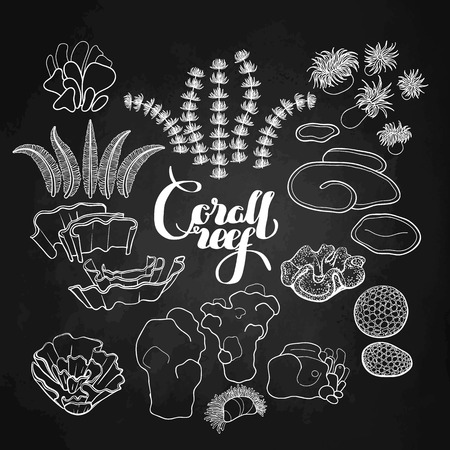 ocean plants: Collection of  ocean plants and coral reef  elements drawn in line art style isolated on chalkboard.