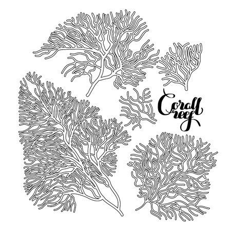 line drawing: Collection of corals drawn in line art style. Ocean design elements isolated on white background
