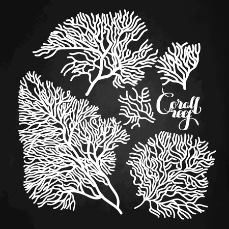 dessin au trait: Collection of corals drawn in line art style. Ocean design elements isolated on chalkboard  background Illustration