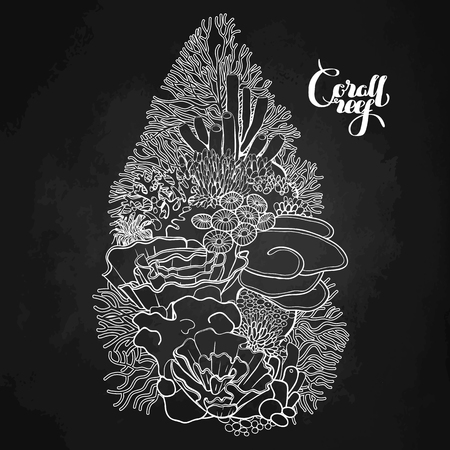 ocean plants: Coral reef design  in line art style. Ocean plants and rocks isolated on chalkboard Illustration