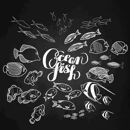 mackerel: Collection of  ocean fish drawn in line art style isolated on chalkboard.