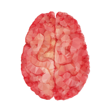 hemispheres: Anatomy collection - polygonal brain. Vector isolated organ. Two separated hemispheres