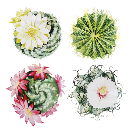 Cute watercolor cactus set. Vector floral design elements isolated on white background  イラスト・ベクター素材