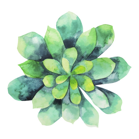 Watercolor green succulent isolated on white background. Cute floral element for your design