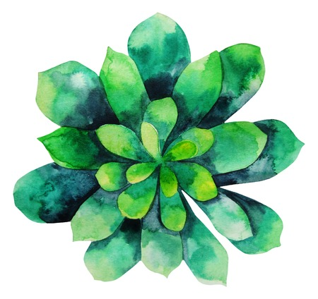 Watercolor green succulent isolated on white background. Cute floral element for your design Standard-Bild