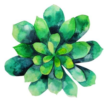 Aquarelle succulent vert isolé sur fond blanc. élément floral mignon pour votre conception Banque d'images - 51484561