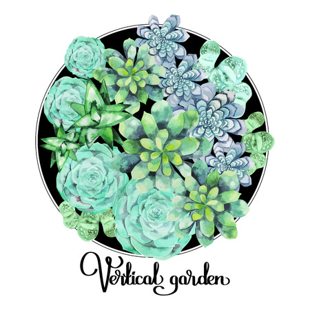 Watercolor green succulent isolated on white background. Cute floral element for your design 向量圖像