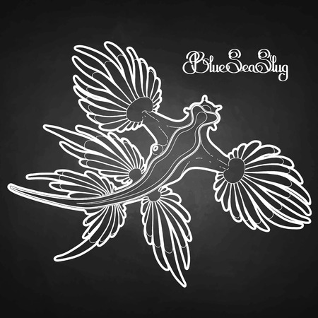 blue dragon: Glaucus atlanticus. Blue sea slug drawn in line art style. Blue dragon. Sea angel. Vector ocean creature isolated chalkboard