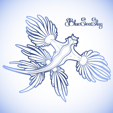 blue dragon: Glaucus atlanticus. Blue sea slug drawn in line art style. Blue dragon. Sea angel. Vector ocean creature in blue colors