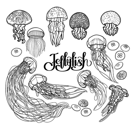 Jellyfish drawn in line art style. Vector ocean animals in black and white colors. Coloring book page design