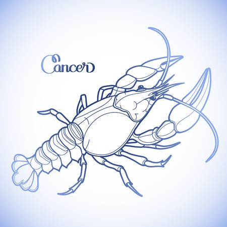Graphic vector cancer drawn in line art style. Sea and ocean creature in blue colors. Top view. Seafood element. Coloring book page design Illustration