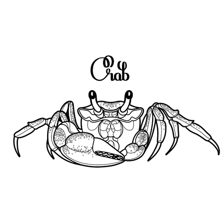 Graphic vector crab drawn in line art style. Sea and ocean creature isolated on white background. Top view. Seafood element. Coloring book page design
