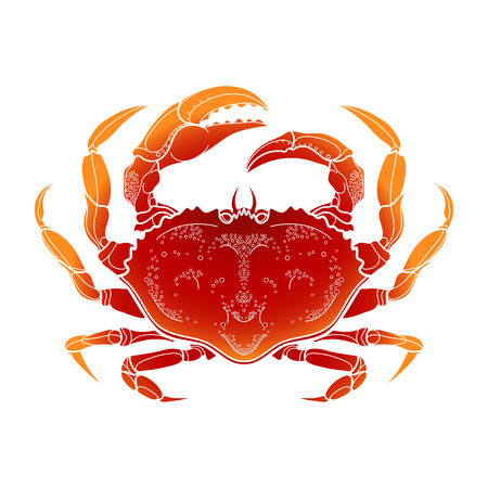 hand line fishing: Graphic vector crab drawn in line art style. Sea and ocean creature isolated on white background in red colors. Top view. Seafood element. Coloring book page design