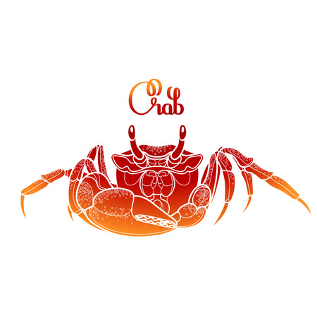 Graphic vector crab drawn in line art style. Sea and ocean creature isolated on white background in red colors. Top view. Seafood element. Coloring book page design