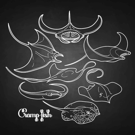manta: Graphic cramp fish collection drawn in line art style. Vector electric Manta ray isolated on chalkboard. Sea and ocean creatures in black and white colors