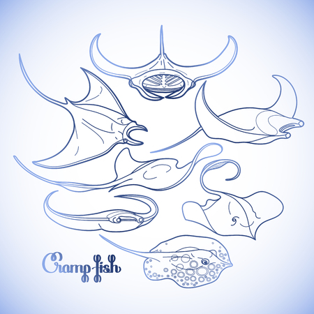 manta: Graphic cramp fish collection drawn in line art style. Vector electric Manta ray isolated on white background. Sea and ocean creatures in blue colors. Coloring book page design