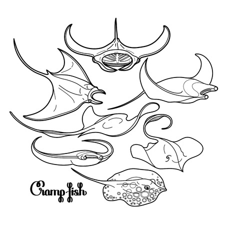 cramp: Graphic cramp fish collection drawn in line art style. Vector electric Manta ray isolated on white background. Sea and ocean creatures in black and white colors. Coloring book page design