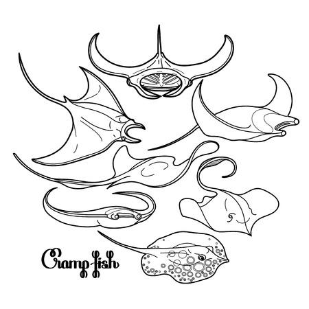 Graphic Krampf Fischsammlung im Einklang Kunststil gezeichnet. Vector elektrische Manta ray isoliert auf weißem Hintergrund. Meer und Ozean Tiere in schwarzen und weißen Farben. Malbuch-Design