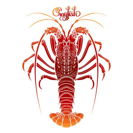 rocky: Graphic vector crayfish drawn in line art style. Spiny or rocky lobster. Sea and ocean creature isolated on white background in red colors. Top view. Seafood element. Coloring book page design