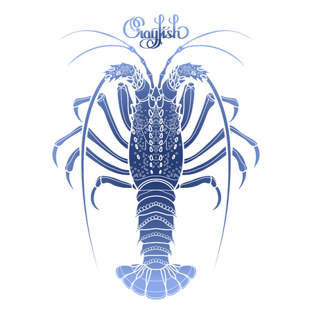 spiny: Graphic vector crayfish drawn in line art style. Spiny or rocky lobster. Sea and ocean creature in blue colors. Top view. Seafood element. Coloring book page design