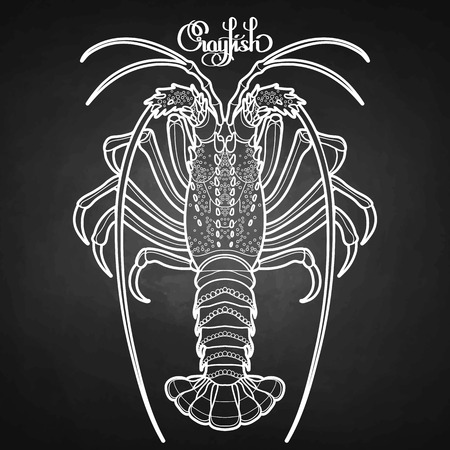 rocky: Graphic vector crayfish drawn in line art style. Spiny or rocky lobster. Sea and ocean creature isolated on chalkboard. Top view. Seafood element. Coloring book page design