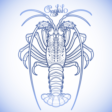 rocky: Graphic vector crayfish drawn in line art style. Spiny or rocky lobster. Sea and ocean creature in blue colors. Top view. Seafood element. Coloring book page design