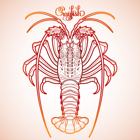 rocky: Graphic vector crayfish drawn in line art style. Spiny or rocky lobster. Sea and ocean creature isolated in red colors. Top view. Seafood element. Coloring book page design Illustration