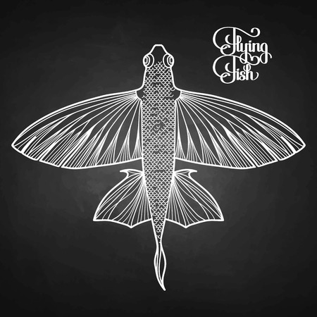 view on sea: Graphic flying fish drawn in line art style. Top view. Sea and ocean creature isolated on chalkboard Illustration