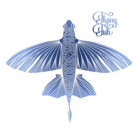 Graphic flying fish drawn in line art style. Top view. Sea and ocean creature isolated on white background. Coloring book page design Illustration