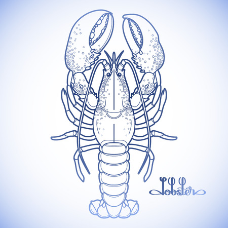 Graphic vector lobster drawn in line art style. Sea and ocean creature in blue colors. Top view. Seafood element. Coloring book page design Illustration