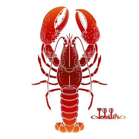 dinner restaurant: Graphic vector lobster drawn in line art style. Sea and ocean creature isolated on white background in red colors. Top view. Seafood element. Coloring book page design Illustration