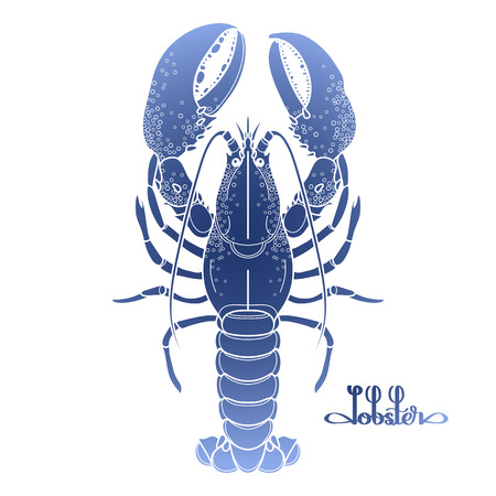 spiny: Graphic vector lobster drawn in line art style. Sea and ocean creature in blue colors. Top view. Seafood element. Coloring book page design Illustration