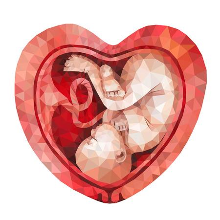 Low-Poly-Vektor Fötus in der Gebärmutter herzförmigen isoliert auf weißem Hintergrund. Polygonal Baby.